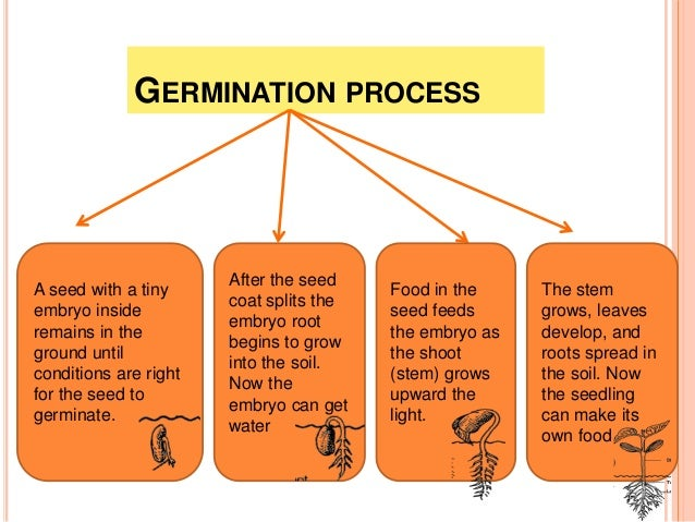 germination growth plants How to start seeds a comprehensive there are a number of factors that affect seed germination warm temperatures can also stimulate leggy growth.