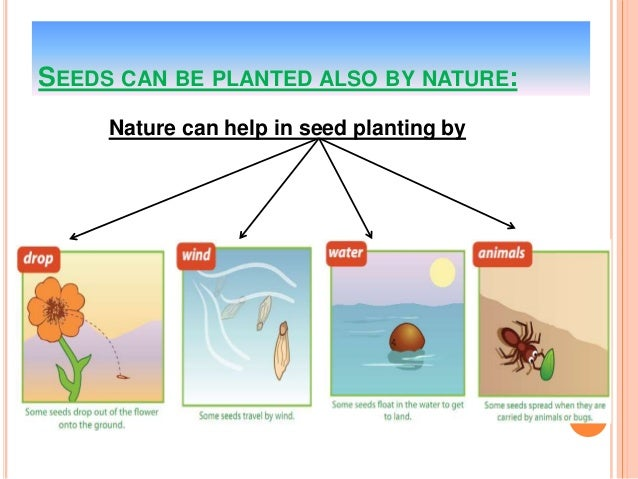 how do seed plants grow reproduce. Black Bedroom Furniture Sets. Home Design Ideas