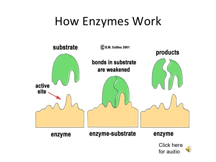 Diagram Of How Enzymes Work
