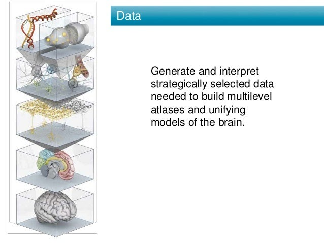 Data Generate and interpret strategically selected data needed to build multilevel atlases and unifying models of the brai...