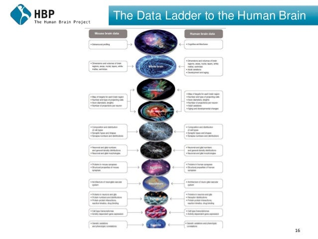 16 The Data Ladder to the Human Brain