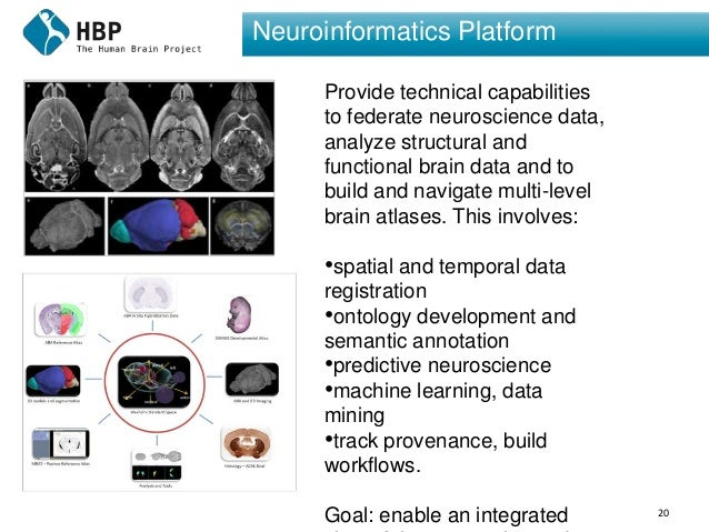 20 Neuroinformatics Platform Provide technical capabilities to federate neuroscience data, analyze structural and function...