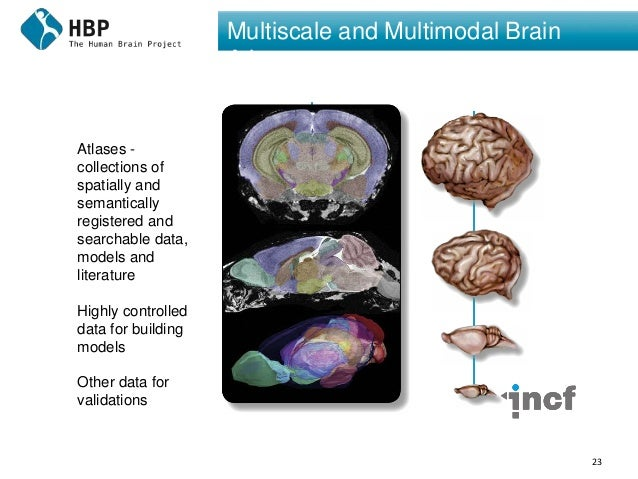 23 Multiscale and Multimodal Brain Atlases Atlases - collections of spatially and semantically registered and searchable d...
