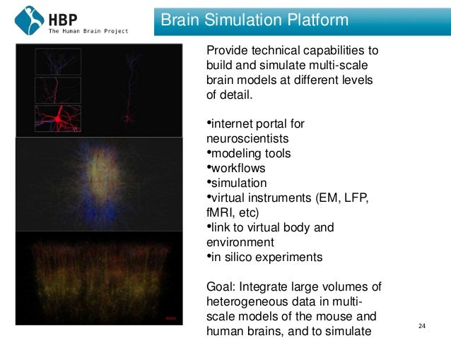 24 Brain Simulation Platform Provide technical capabilities to build and simulate multi-scale brain models at different le...
