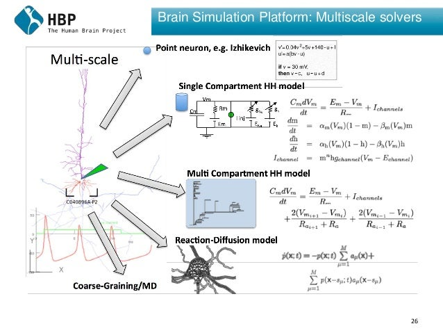26 Brain Simulation Platform: Multiscale solvers