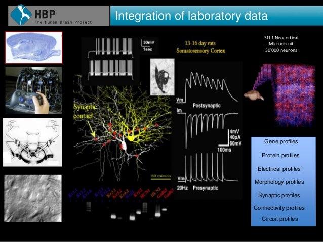27 Integration of laboratory data 27 S1L1 Neocortical Microcircuit 30'000 neurons 400 Electrical Behaviors Gene profiles S...