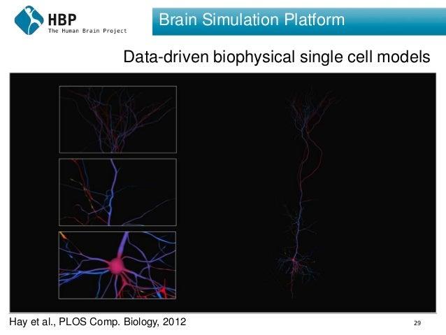 29 Brain Simulation Platform Data-driven biophysical single cell models Hay et al., PLOS Comp. Biology, 2012