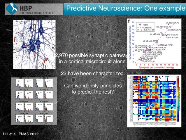 3030 Predictive Neuroscience: One example Hill et al. PNAS 2012 2,970 possible synaptic pathways in a cortical microcircui...
