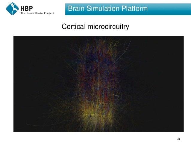 31 Brain Simulation Platform Cortical microcircuitry