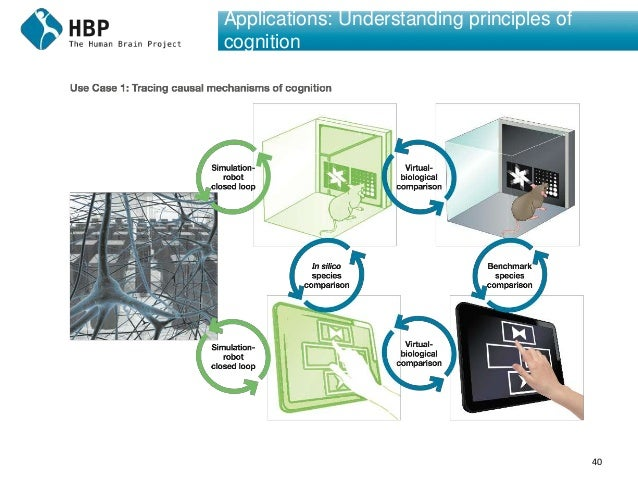 40 Applications: Understanding principles of cognition