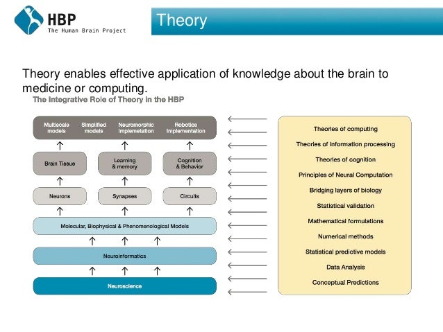 Theory Theory enables effective application of knowledge about the brain to medicine or computing.