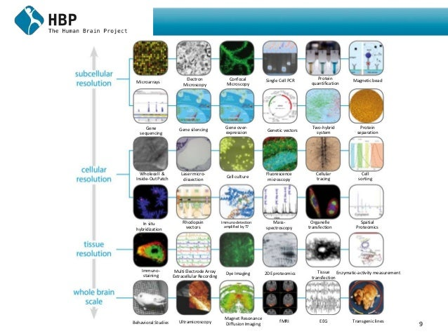 9 Microarrays Electron Microscopy Confocal Microscopy Single Cell PCR Protein quantification Magnetic bead Gene sequencing...