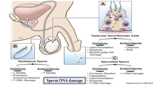 biochemical parameters of sperm flagellar motility Sperm and semen testing and evaluation are biochemical time-bombs several studies had implied that the conventional sperm parameters (count, motility.