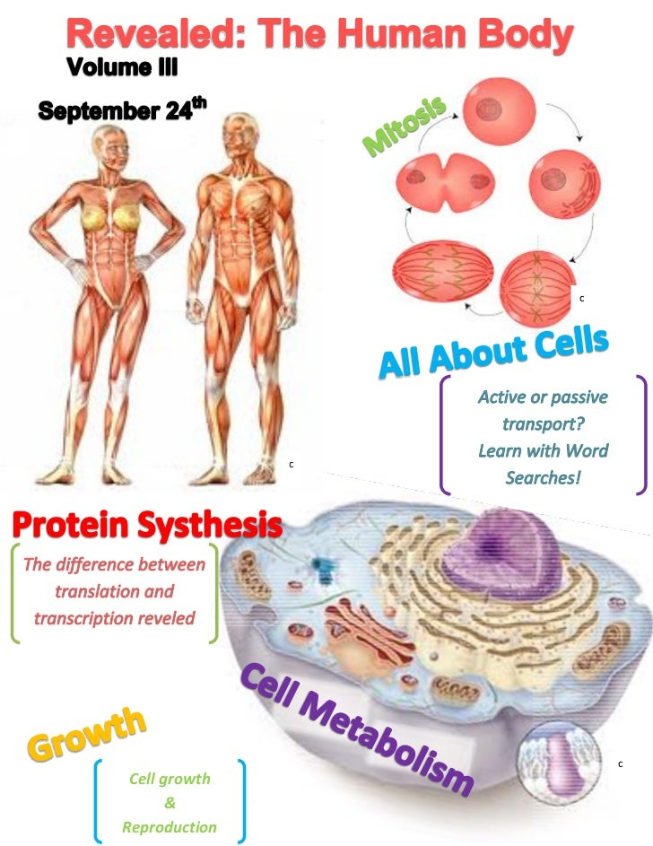 c               c                       c Cell growth       &Reproduction