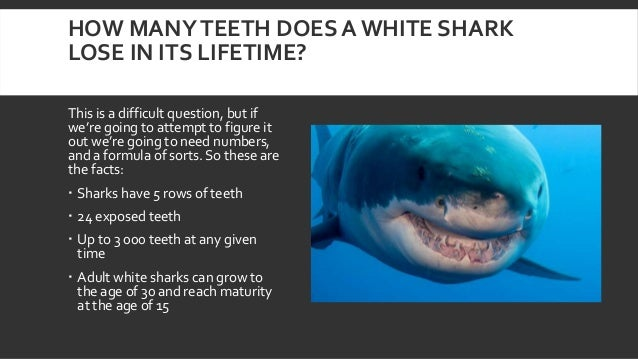 How Much Does The Tooth Fairy Owe A Great White Shark