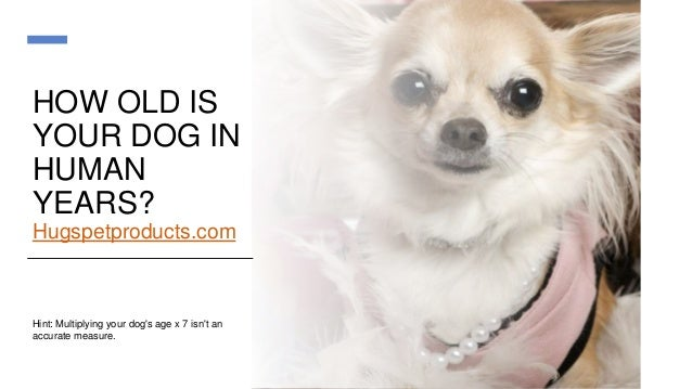 HOW OLD IS YOUR DOG IN HUMAN YEARS? Hugspetproducts.com Hint: Multiplying your dog's age x 7 isn't an accurate measure.