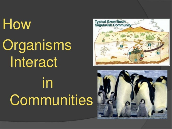 How<br />Organisms     Interact<br />          in Communities<br />