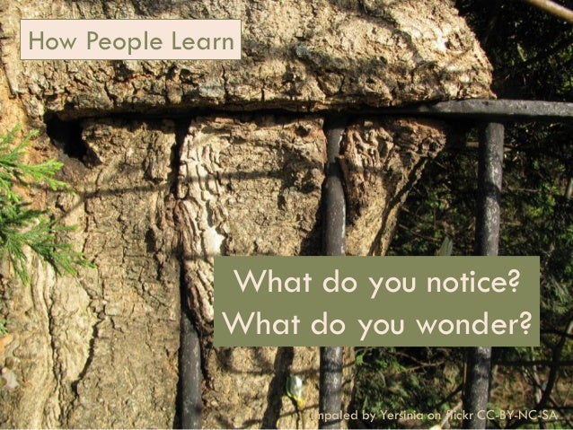 How People Learn  What do you notice? What do you wonder? 1 How (You Can Help) People Learn (Biology)  impaled by Yersinia...
