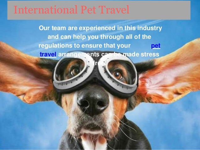Aeropets Is Best Pet Travel Service