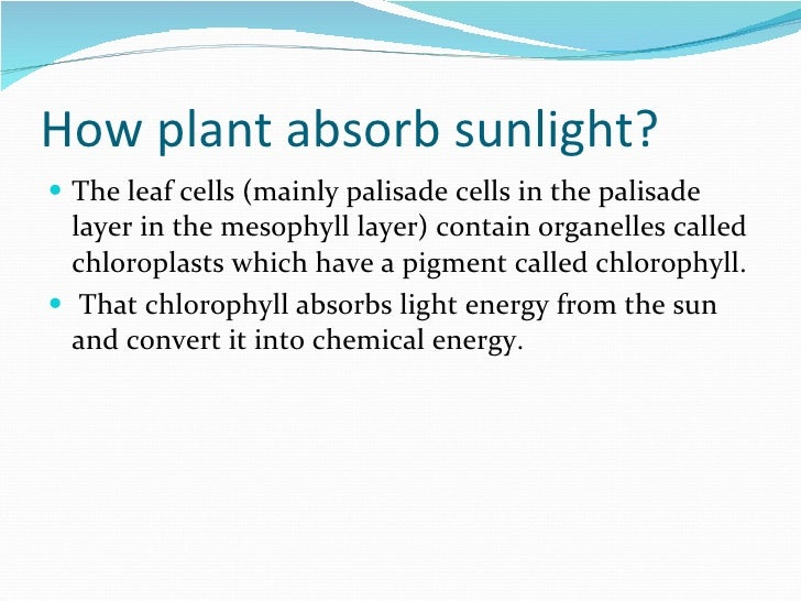 Does A Chlorophyll Contain A Porphyrin Ring And Phytol Tail