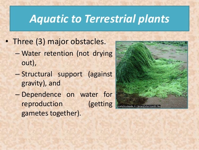 an overview of terrestrial plants The aim of the present study was to provide an overview of the available scientific literature on the effects of spray drift of glyphosate and glyphosate‐based herbicides on nontarget terrestrial plants, a topic which has not been reviewed previously.