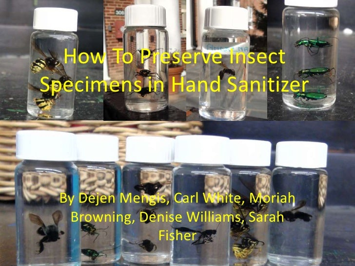 How To Preserve Insect Specimens in Hand Sanitizer<br />By DejenMengis, Carl White, Moriah Browning, Denise Williams, Sara...