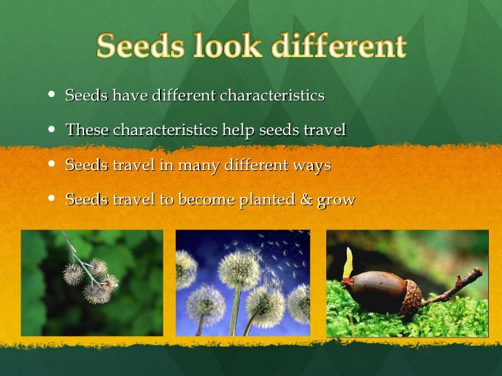 how seeds travel worksheet kindergarten how best free printable worksheets. Black Bedroom Furniture Sets. Home Design Ideas