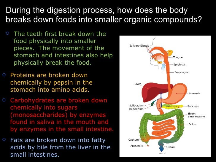 How the body obtains and uses energy