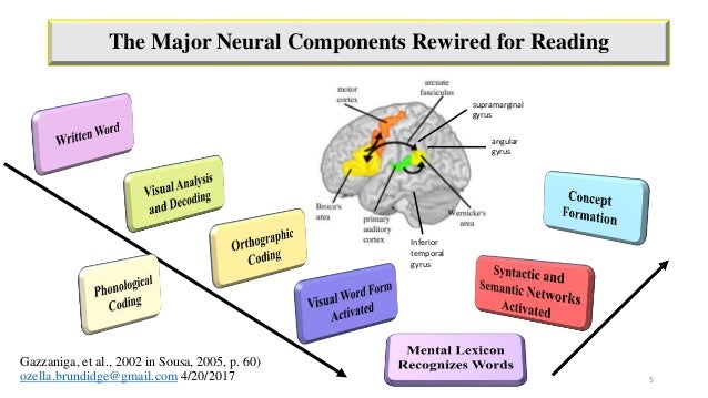 How the Adult Brain Learns: The Importance of Creating Enriched Environments When Teaching
