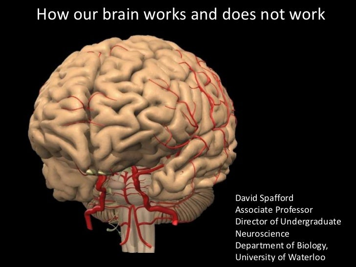 How our brain works and does not work                         David Spafford                         Associate Professor  ...
