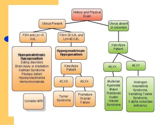 how to approch a case of amenorrhea, Skeleton