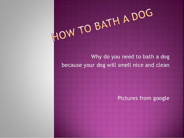 Why do you need to bath a dog because your dog will smell nice and clean Pictures from google
