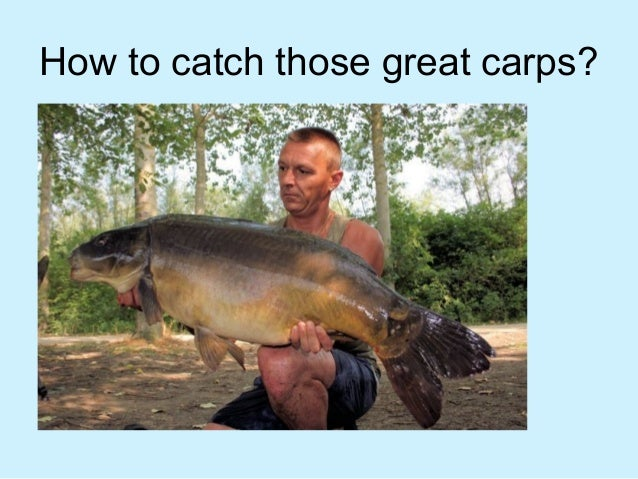 How to catch those great carps?