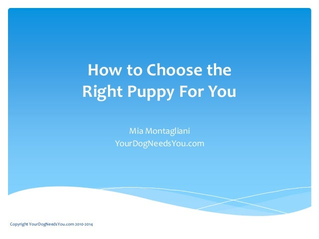 How to Choose the Right Puppy For You Mia Montagliani YourDogNeedsYou.com Copyright YourDogNeedsYou.com 2010-2014