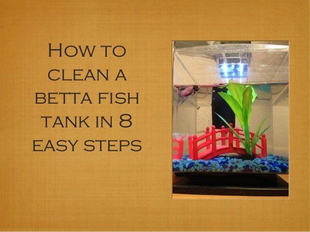 How to clean your betta fish tank for How to clean a fish tank