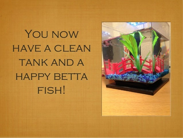 How to clean your betta fish tank for How to clean a 10 gallon fish tank