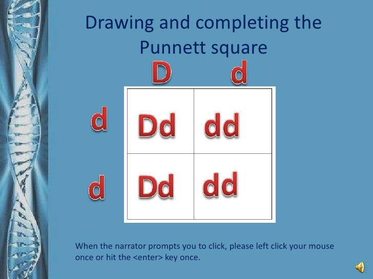 How To Complete A Punnett Square