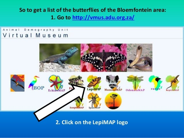 So to get a list of the butterflies of the Bloemfontein area:  1. Go to http://vmus.adu.org.za/  2. Click on the LepiMAP l...