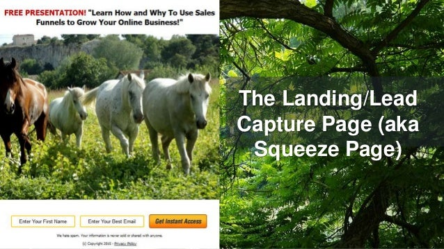 The Landing/Lead Capture Page (aka Squeeze Page)