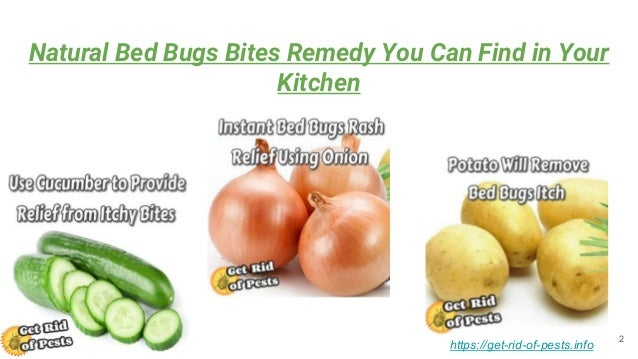 remedies home of bed titleimage for incl to recipes get rid bugs