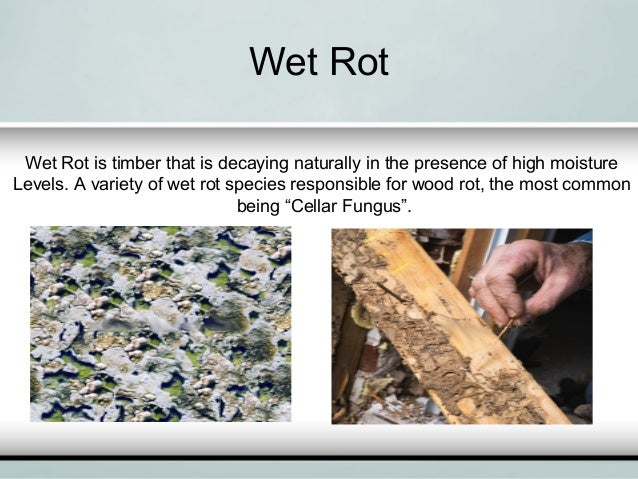 Quot How To Deal With Dry Rot And Wet Rot Quot