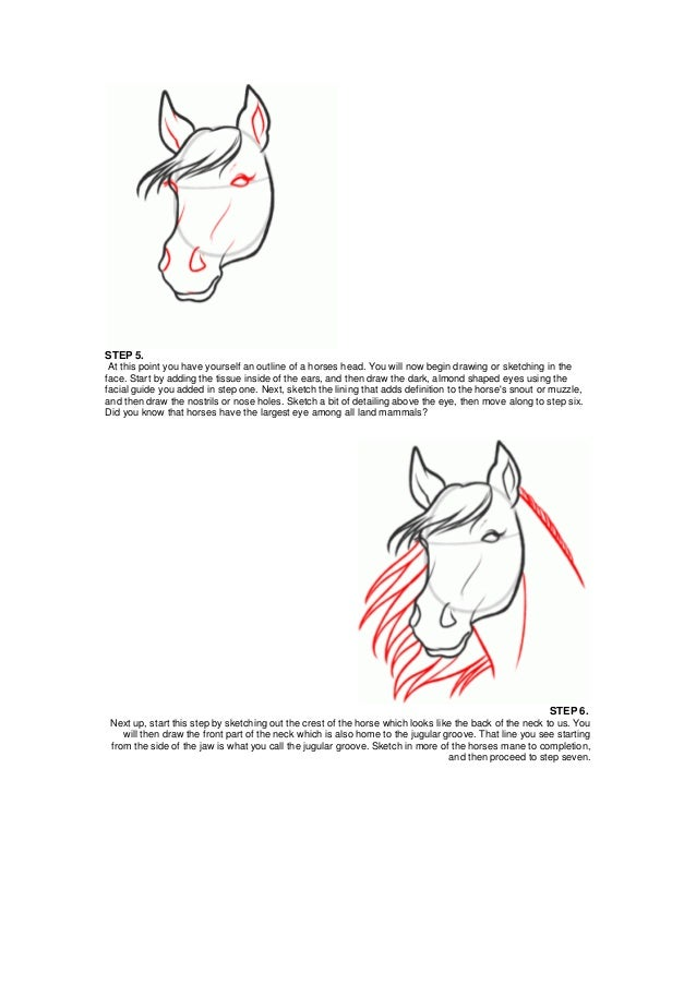 How to draw a horse head 3 ccuart Images