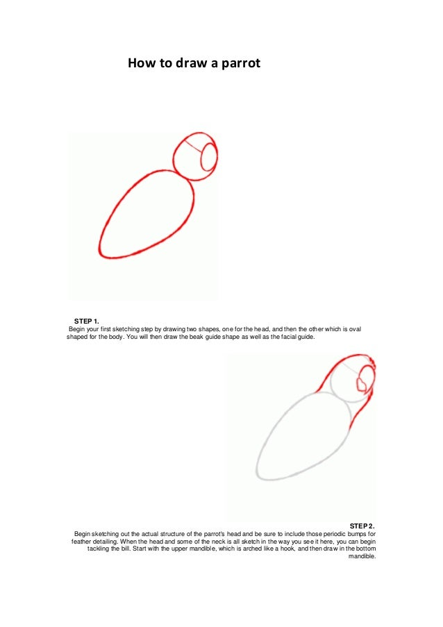 How to draw a parrotSTEP 1.Begin your first sketching step by drawing two shapes, one for the head, and then the other whi...