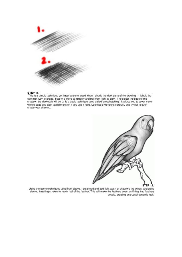 how to draw a parot