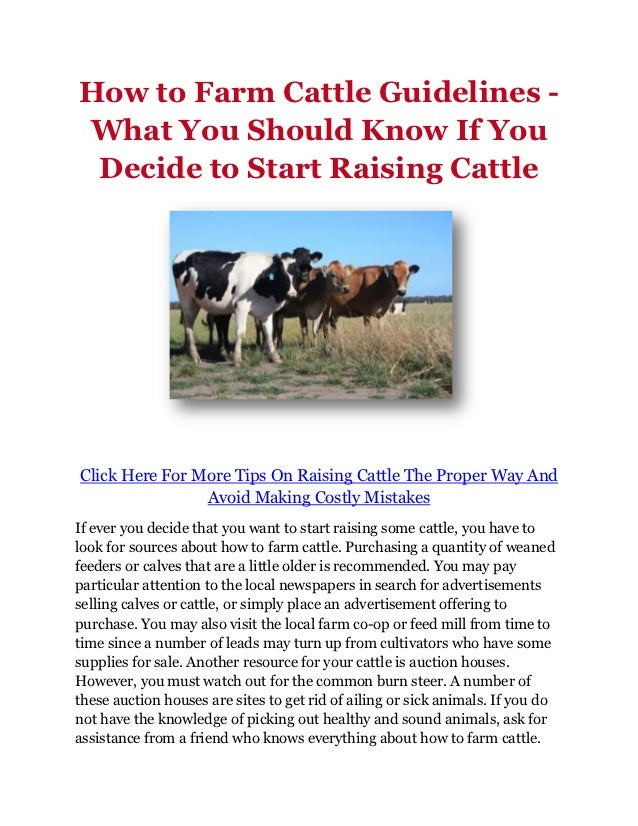How to Farm Cattle Guidelines -What You Should Know If You Decide to Start Raising CattleClick Here For More Tips On Raisi...