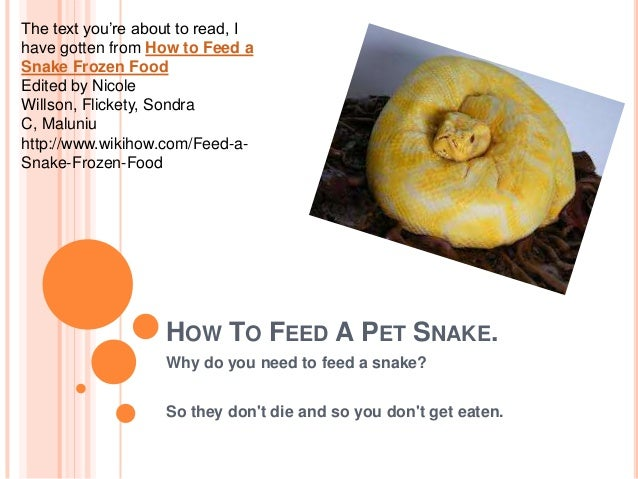HOW TO FEED A PET SNAKE. Why do you need to feed a snake? So they don't die and so you don't get eaten. The text you're ab...