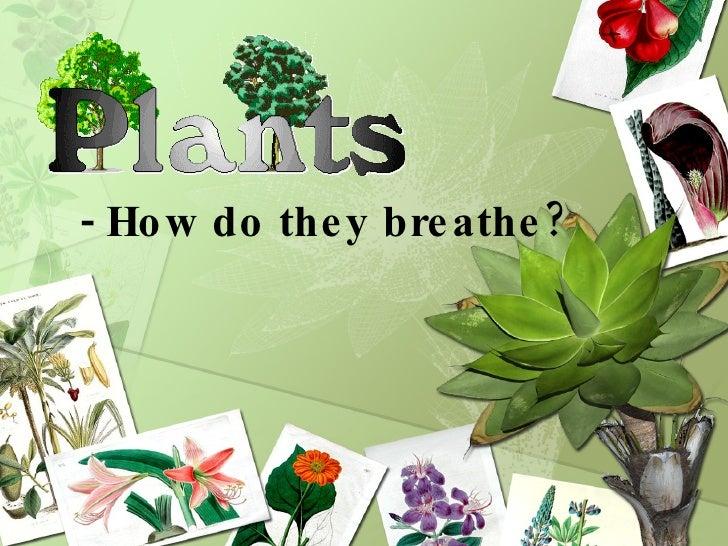 - How do they breathe?
