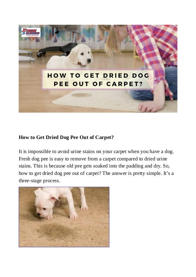 How To Get Dried Dog Pee Out Of Carpet