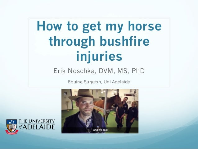 How to get my horse through bushfire injuries Erik Noschka, DVM, MS, PhD Equine Surgeon, Uni Adelaide