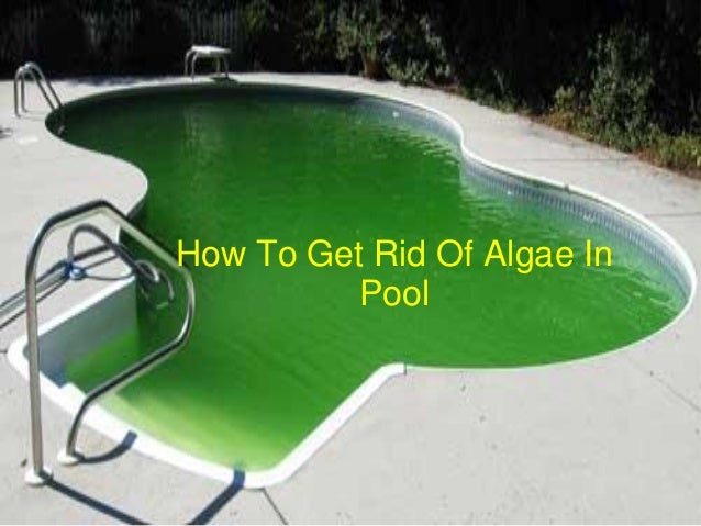 How To Get Rid Of Algae In Pool